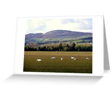 Wetlands Wild Geese Greeting Card