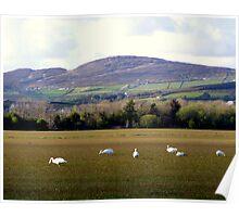 Wetlands Wild Geese Poster