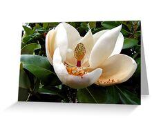 A Texas Magnolia Blossom Greeting Card