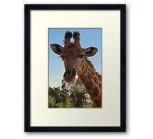 Inquisitive Giraffe Framed Print