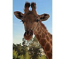 Inquisitive Giraffe Photographic Print