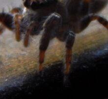 Jumping Spider (4501) Sticker