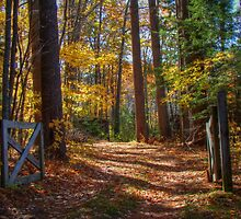 Down the Country Lane by Carrie Blackwood