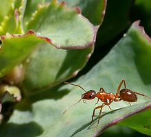 ANT by Betsy  Seeton