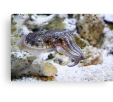 Want to Cuttle? Canvas Print