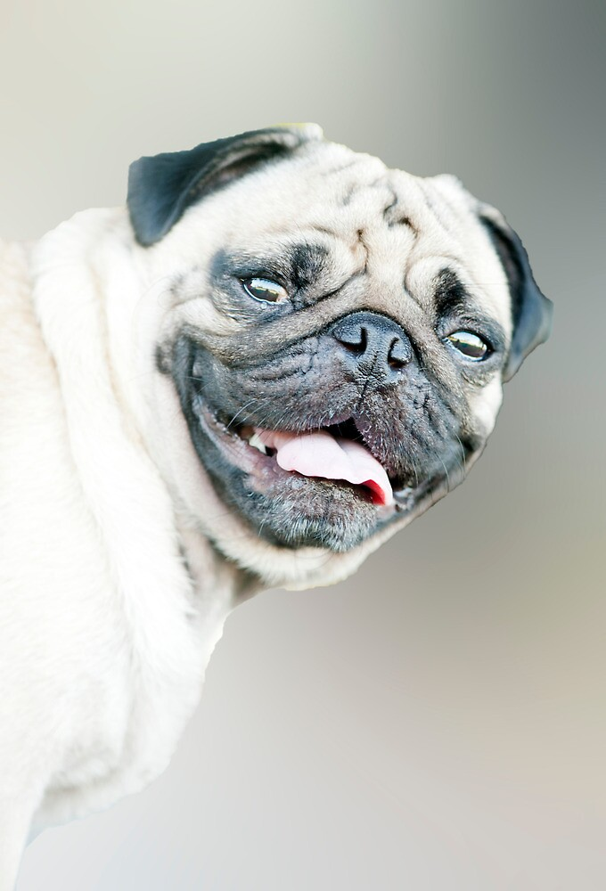 Winston - pug portrait :) by Jenny Dean