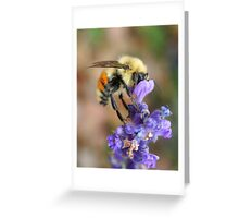 A Beautiful Little Bumble Bee Greeting Card