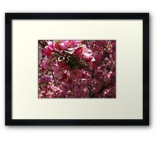 Pink Pink and more Pink! Framed Print