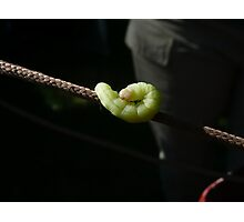 Crazy Caterpillar Photographic Print