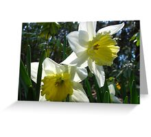 Daffodil concerierges Greeting Card