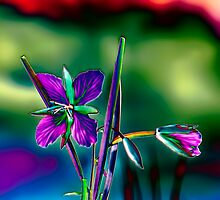 Purple & Blue Fireweed by Alaskandreamer