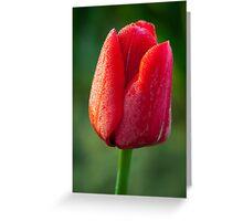 Dewey Tulip Greeting Card