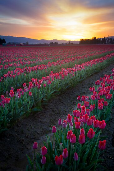 Skagit Valley Dawn by Inge Johnsson