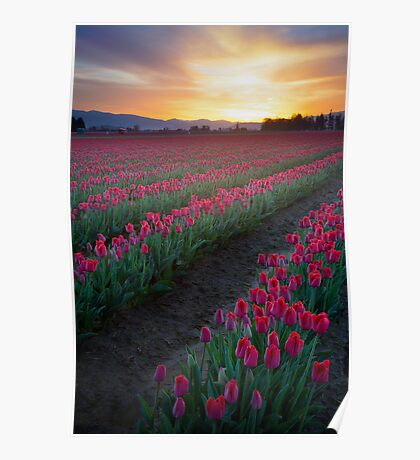 Skagit Valley Dawn Poster