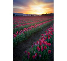 Skagit Valley Dawn Photographic Print