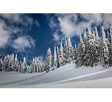 Mazama Trees Photographic Print