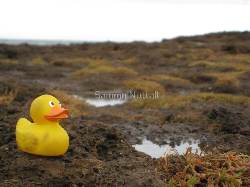 Duckscovering Rock Pools by Sammy Nuttall