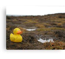 Duckscovering Rock Pools Canvas Print