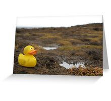 Duckscovering Rock Pools Greeting Card