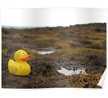 Duckscovering Rock Pools Poster