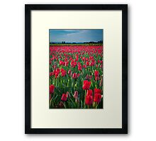 Mount Vernon Tulips Framed Print