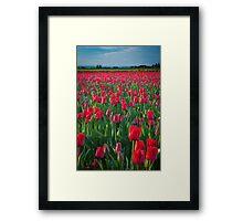 Mount Vernon Tulips Framed Print