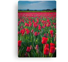 Mount Vernon Tulips Canvas Print