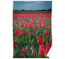 Mount Vernon Tulips Poster