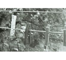 Clothing pins Photographic Print