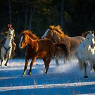 Chasing Horses by Inge Johnsson