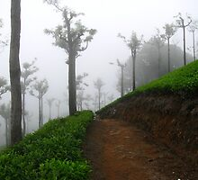 Misty Miss Tea... by sarangprabhune