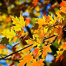 Autumn Kaleidoscope  by Tamara Travers