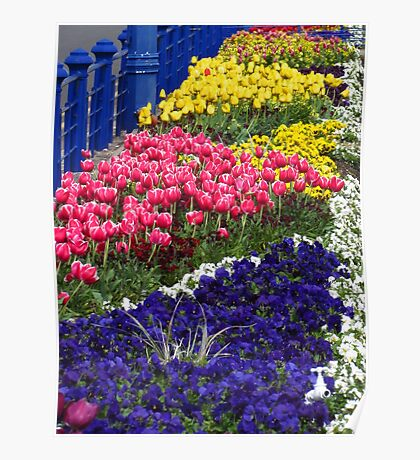 Blue Railings and Flowers Poster