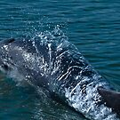 Dolphin close up by EGGY6198