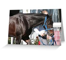 Champion ... legend ... Black Caviar Greeting Card