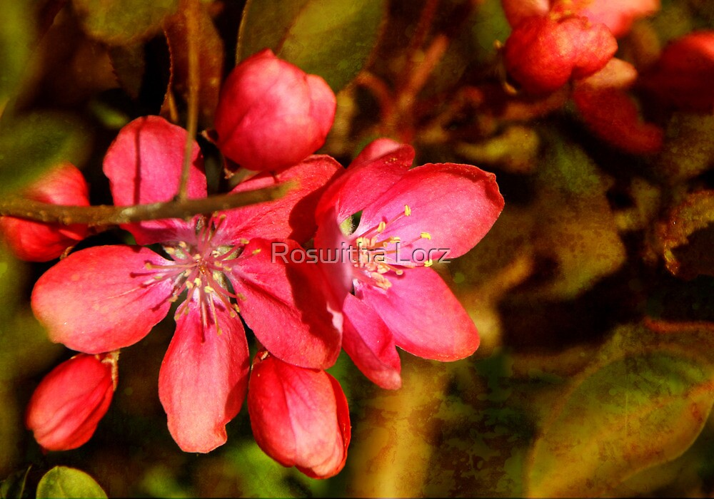 Apple Blossom by RosiLorz