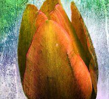 Happy Tulip by RosiLorz