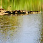 Waiting Crocodile in a River of Blue and Green by Michael Deeble