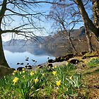 Daffodils at Wordsworth Point, Ullswater by Martin Lawrence