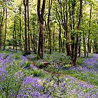 Bluebells at Whitemoss Common near Grasmere by Martin Lawrence