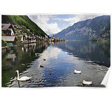 Swans in Hallstatt, Austria Poster