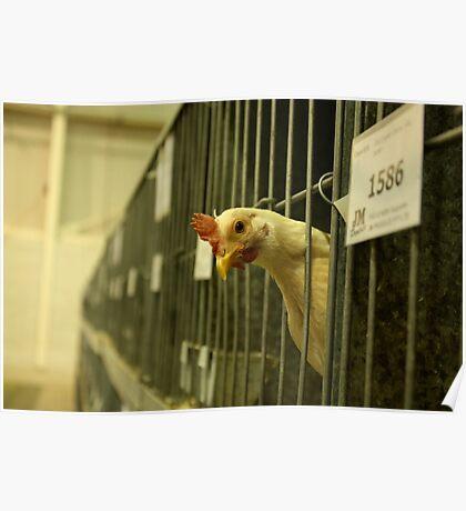 Chicken not Chicken Poster