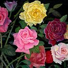 Roses by Mike Crawford