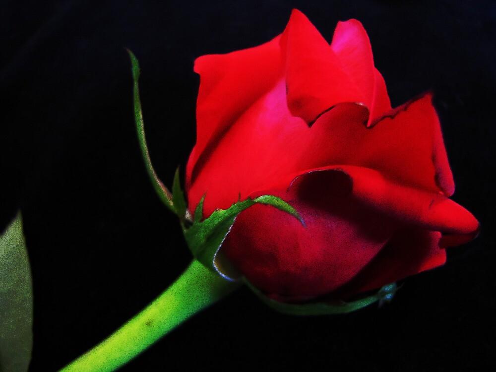 Rose Red by Mistyarts