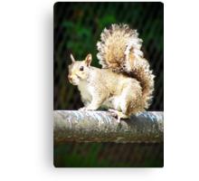 Mississippi Squirrel Canvas Print
