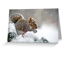 Snowy Squirrel Greeting Card