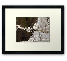 Snow Barbed Wire Framed Print