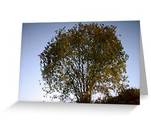 reflection of a tree in mirror still water Greeting Card