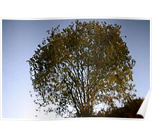 reflection of a tree in mirror still water Poster