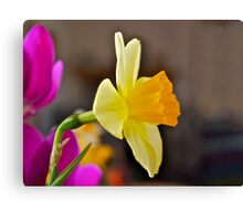 Daffodil Paintography Canvas Print